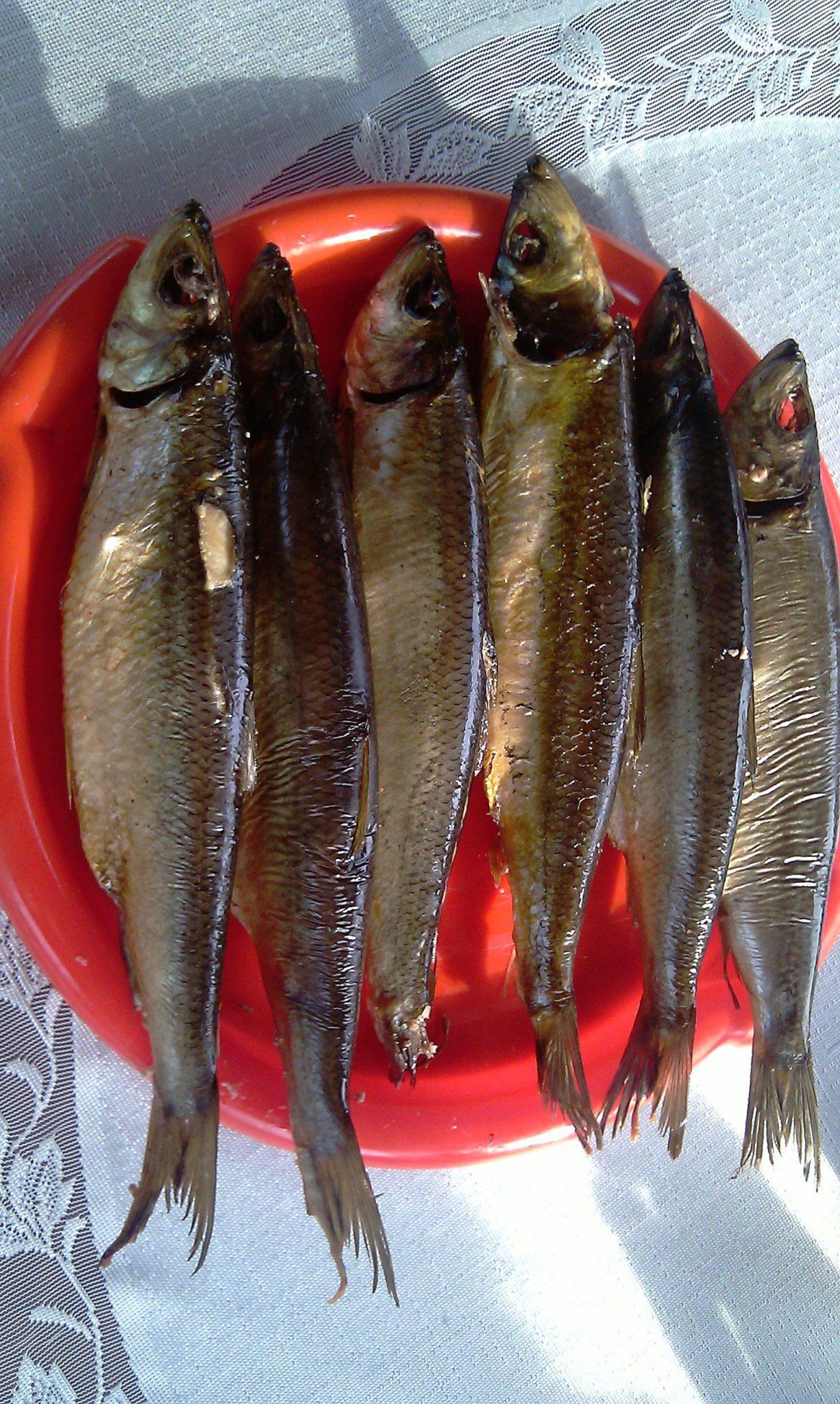 Kızılağaç talaş kullanımı ile ülkede bir tütün içinde balık içmek için nasıl 92